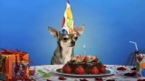 How to make a dog friendly birthday cake