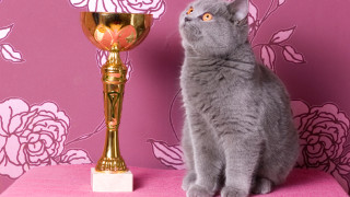 Does your CAT have what it takes to win 'Best in Show'?