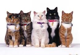 Which cat breeds make awesome Pets!