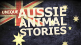 Here's a taste of our Aussie Animal Stories